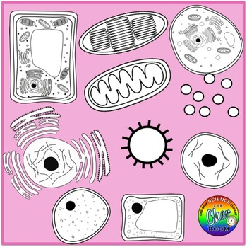Plants and Animals Cells Clipart