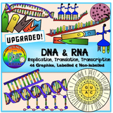 DNA and RNA Clipart