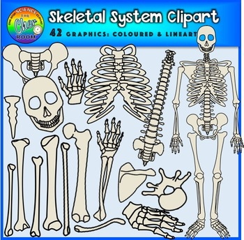Human Skeleton and Skeletal Body Parts Clipart by The Cher Room | TpT