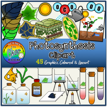 Plants Clipart- Photosynthesis