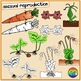 Reproduction in Plants Clipart