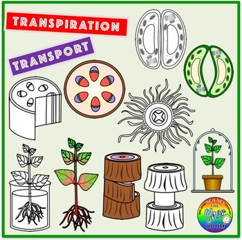 Plants Clipart- Transport and Transpiration