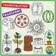 Transport in Plants Clipart