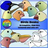 Birds Beaks Clipart (Birds Adaptations)