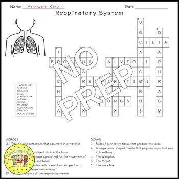 The Respiratory System Crossword Puzzle