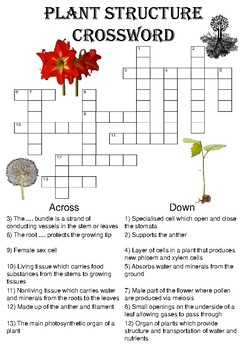 Biology Crossword Puzzle: Structure of a plant