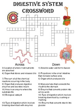 Biology crossword puzzle the digestive system includes answer key ccuart Images