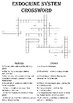 Biology Crossword Puzzle: The endocrine system (Includes answer key)