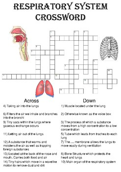 Biology Crossword Puzzle: The respiratory system (Includes answer key)