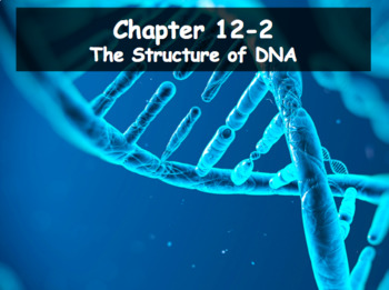 Biology - DNA 12.2 The Structure of DNA
