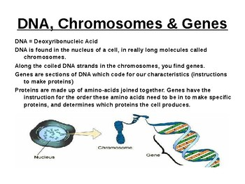 Biology - DNA, Cell Division, Mendel, Genetic diagrams, Screening.