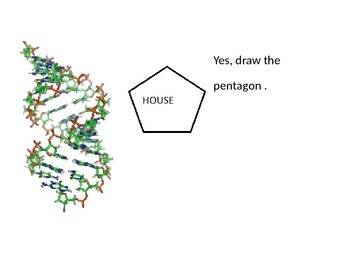 Biology - DNA Stucture in Detail
