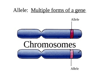 Biology: Genetics (Visually Adapted for ELL/ESL)