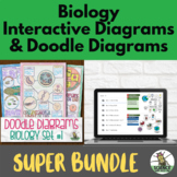 Biology Doodle Diagram Notes PLUS Biology Interactive Diag