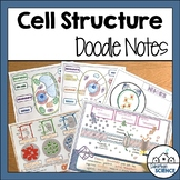 Cell Organelles Doodle Notes - Plant and Animal Cells Diagrams