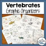 Vertebrates Graphic Organizers - Vertebrate Animals Illustrated Notes
