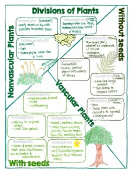 Biology Doodle Notes- Viruses/Bacteria, Protists, Fungi, Plants