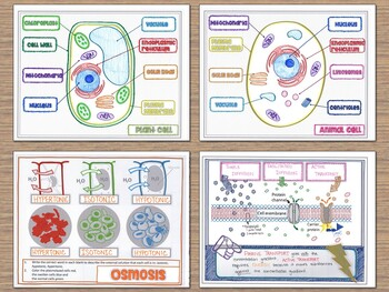 Biology Doodle Notes and Graphic Organizers Bundle