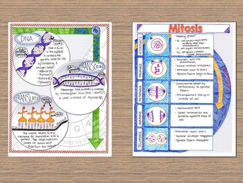 Biology Illustrated Notes and Graphic Organizers Bundle