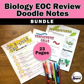 BUNDLE: Biology EOC Doodle Notes Final Review by ...