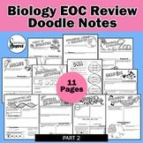 Biology EOC Doodle Notes Final Review -  Part 2