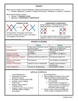 Biology EOC Quick Review CELL DIVISION SC.912.L.16.17