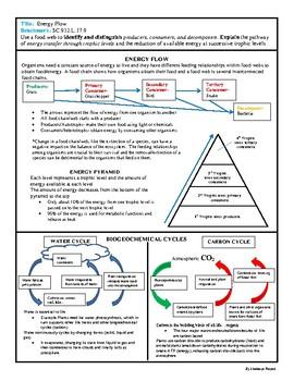 Biology EOC Quick Review ENERGY FLOW SC.912.L.17.9
