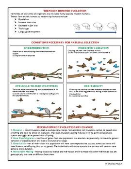 Biology EOC Quick Review EVOLUTION & NATURAL SELECTION SC.912.L.15.1 & L.15.13