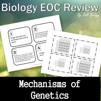 Biomolecule review teaching resources teachers pay teachers biology eoc review mechanisms of genetics task cards included fandeluxe Gallery