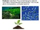 Biology - Ecology and Trophic Pyramids