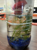 Biology - Ecosystem in a bottle student activity