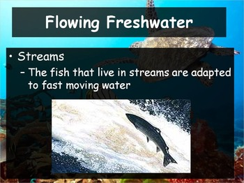 Biology 4 5 Aquatic Ecosystems Powerpoint And Guided Notes Tpt