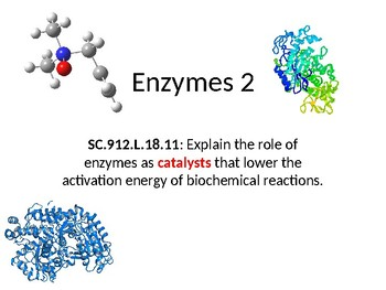 Biology - Enzymes 2
