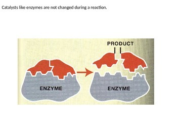 Biology - Enzymes
