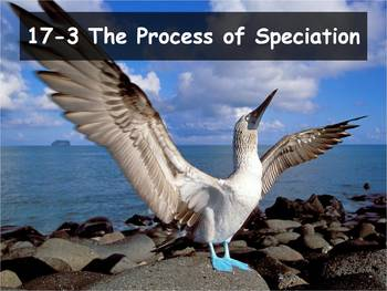 Biology - Evolution (17.3 The Process of Speciation Powerpoint & Guided Notes)