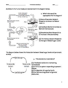 High School Biology Exam - Homeostasis, Feedback, & Regulation