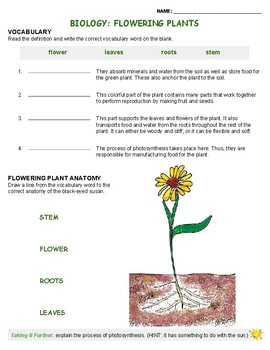 Biology: Flower Plants