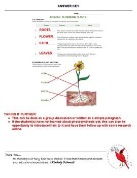 Biology: Flower Plants