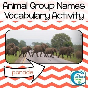 Animal Group Names Vocabulary Activity