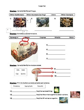 Biology: Fungus (Visually Adapted for ELL/ESL) Summative Exam