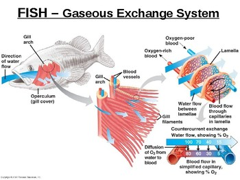 Biology - Gaseous Exchange & Dissections.