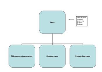 Biology - Gaseous Exchange Helpsheets