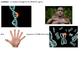 Biology - Genetic Variations