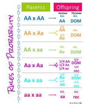 Biology Genetics Probability Poster