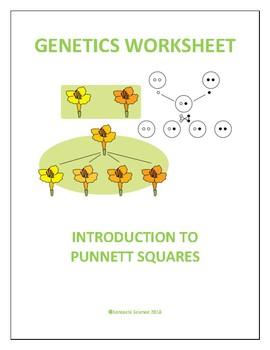 BIOLOGY GENETICS WORKSHEET ON PUNNETT SQUARES