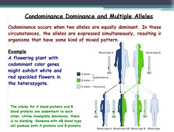 Genetics - Gregor Mendel; Mendel's Laws with Worksheet