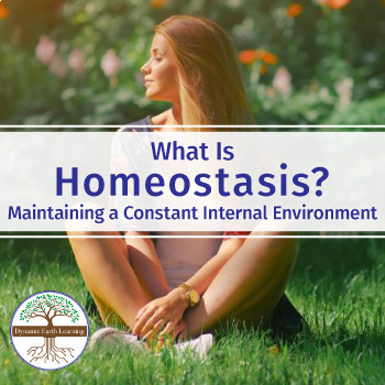 What is Homeostasis? - Biology Introductory Video Worksheet