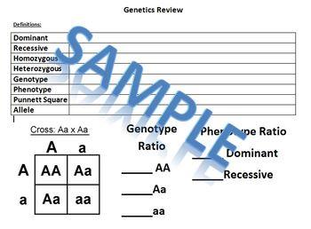 Biology Hardy Weinberg Equation Population Study Procedure Sheet