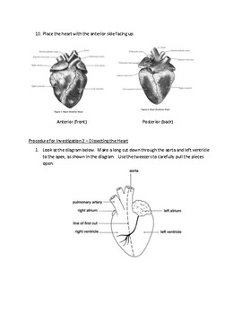 Biology - Heart Dissection Lab