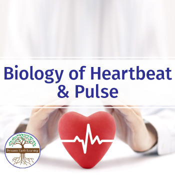Biology of  Heartbeat and Pulse - Video Worksheet Activity